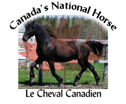 can-nat-horse