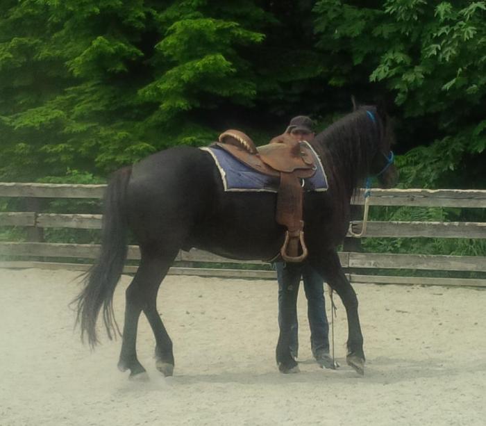 Yukon saddle